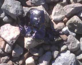 bolinas-lagoon-oil1.jpg